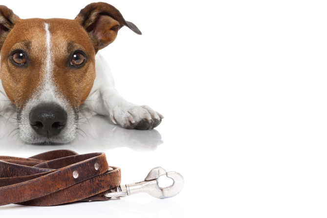 What do Shop Owners Need to Know About Selling CBD Pet Products?