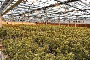 Harvest cultivation facility